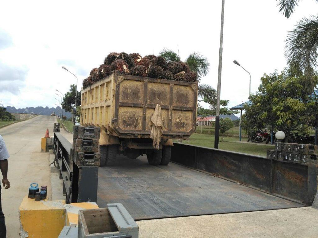 jembatan timbang kelapa sawit